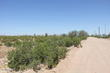 maricopa,  AZ 85139